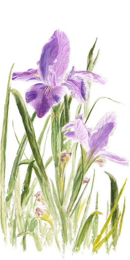 Iris by Phillip Anthony